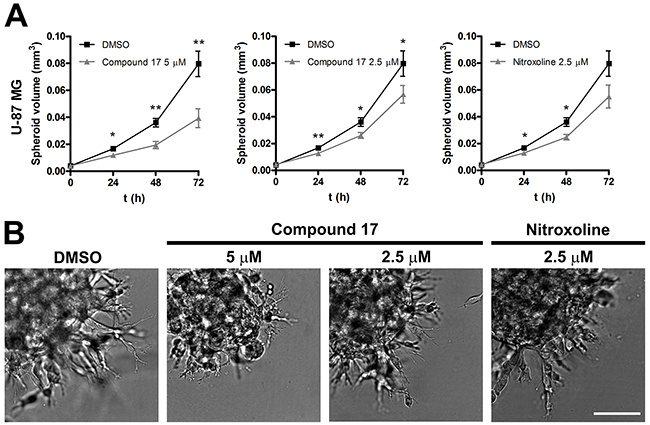 Compound 17 impairs invasion of U-87 MG cells in a 3D in vitro model of tumor invasion.