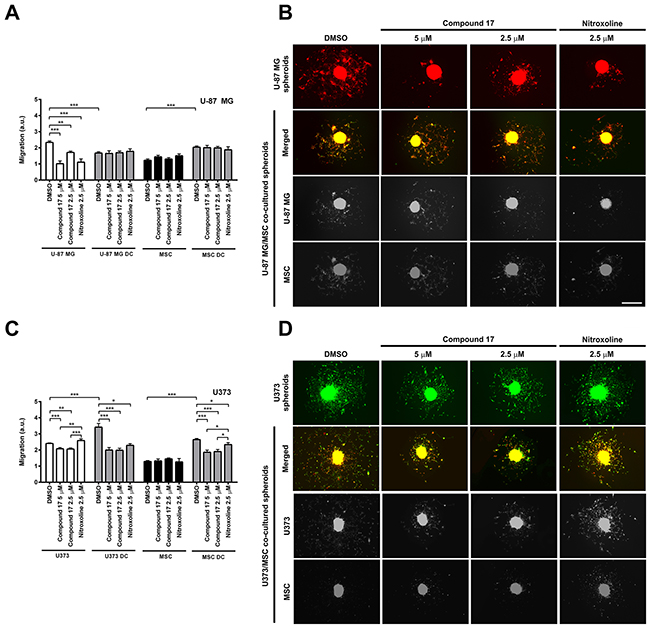 Effects of compound 17 and nitroxoline on the migration of cells out of co-cultured spheroids.