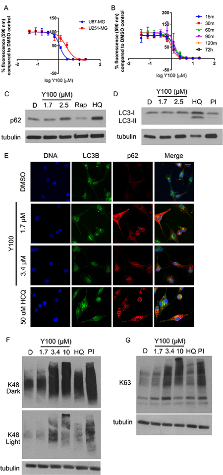 Y100 inhibits NF1 deficient mammalian cells and modulates markers of proteostasis.