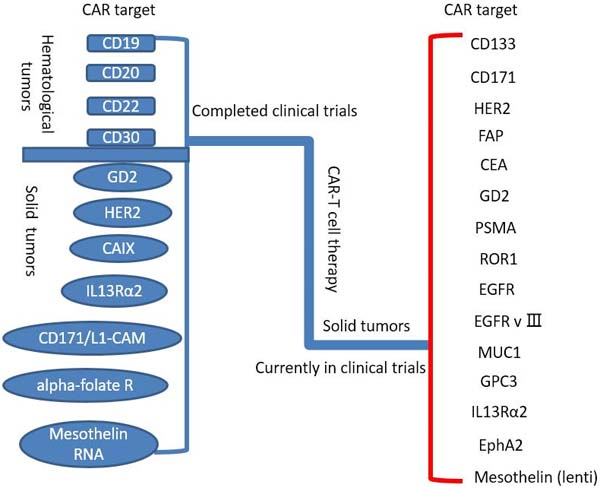 Completed and ongoing CAR-T cell therapy clinical trials (per ClinicalTrials.gov).