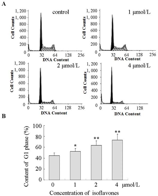 Isoflavones blocked G1/S progression in Y79 cells