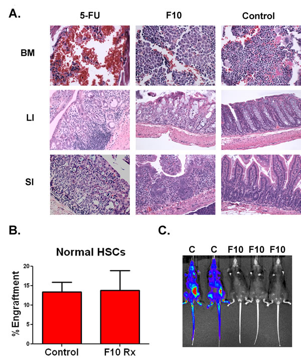F10 is well tolerated and does not injure human HSCs.