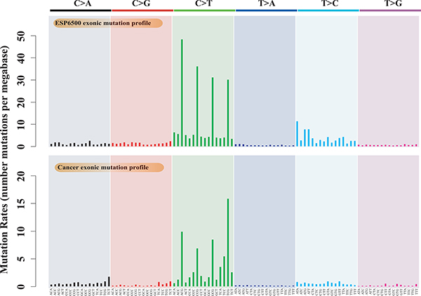 Mutation profiles of cancer somatic mutations and germline substitutions, including the exonic mutation profile of 9,155 cancer samples and the exonic mutation profile of ESP6500.