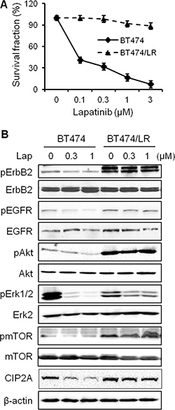 CIP2A overexpression confers lapatinib resistance in breast cancer cells.