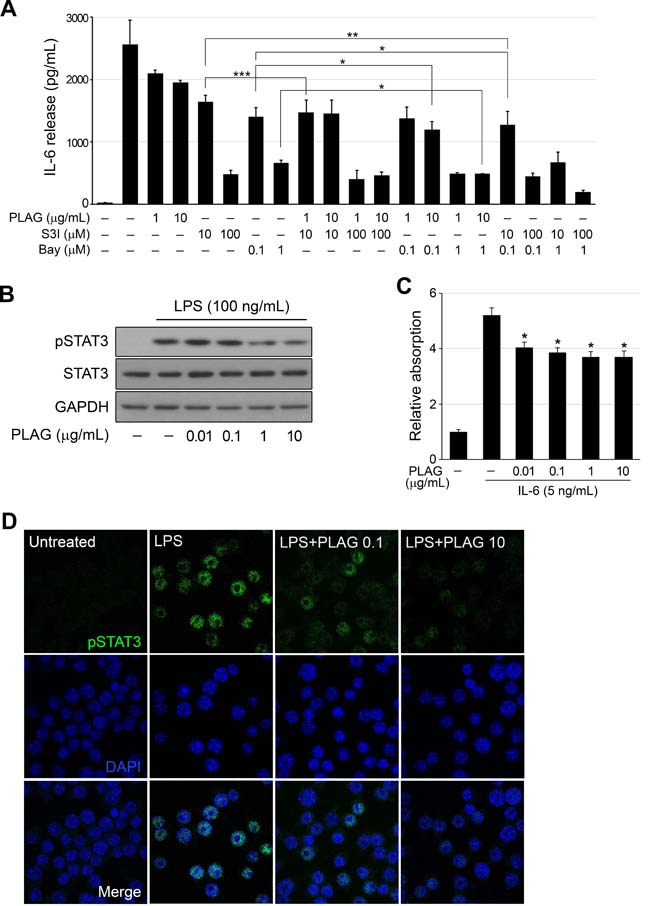 PLAG regulated activation of STAT3.