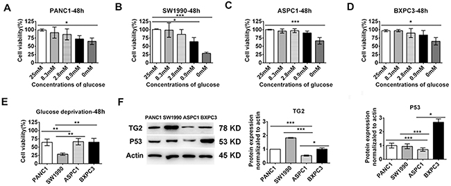 The cell lines displayed differential expression of TG2 and p53 and sensitivities to glucose starvation.