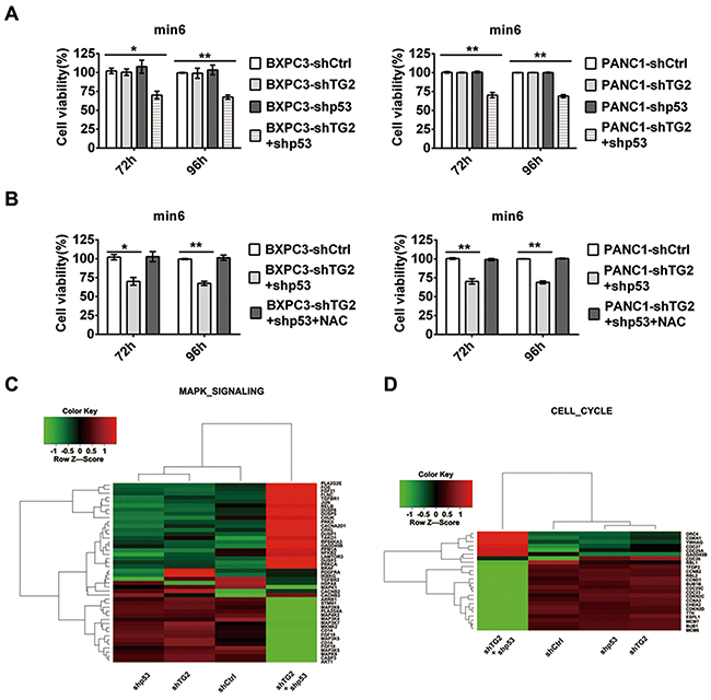 Pancreatic cancer cells with silenced TG2 and p53 combinations affect the survival of pancreatic β cell.