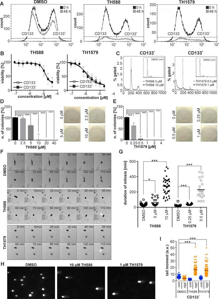 Inhibition of MTH1 targets GBM stem cells.