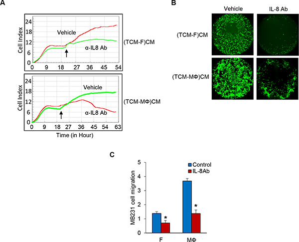 Inhibition of IL-8 blocks TNBC cell proliferation and migration.