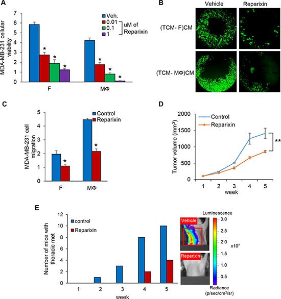 Reparixin, CXCR1/2 inhibitor blocks TNBC cell proliferation and migration.