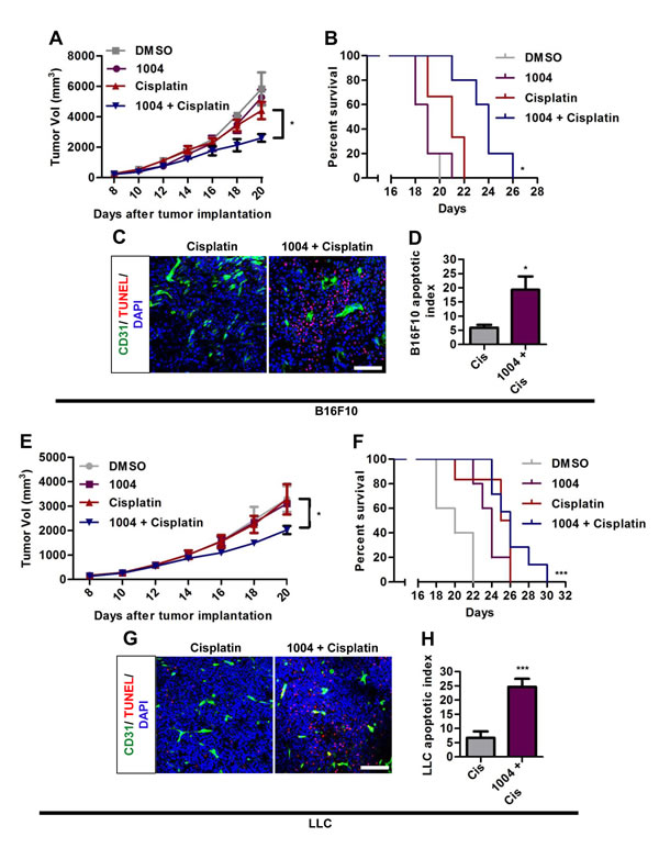 Sac-1004 augments the tumor-growth suppressing effect of cisplatin in tumor-bearing mice.