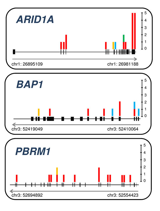 Somatic mutations detected in chromatin remodeling genes ARID1A, BAP1, and PBRM1.