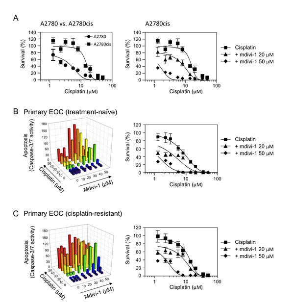 The combination of cisplatin and mdivi-1 efficiently overcomes acquired cisplatin resistance in human ovarian cancer cells, including those from endstage cisplatin- and treatment-refractory patient (A) The comparison of cisplatin sensitivity in ovarian cancer cells A2780 and their derivative cisplatin-resistant A2780cis cells (left panel).
