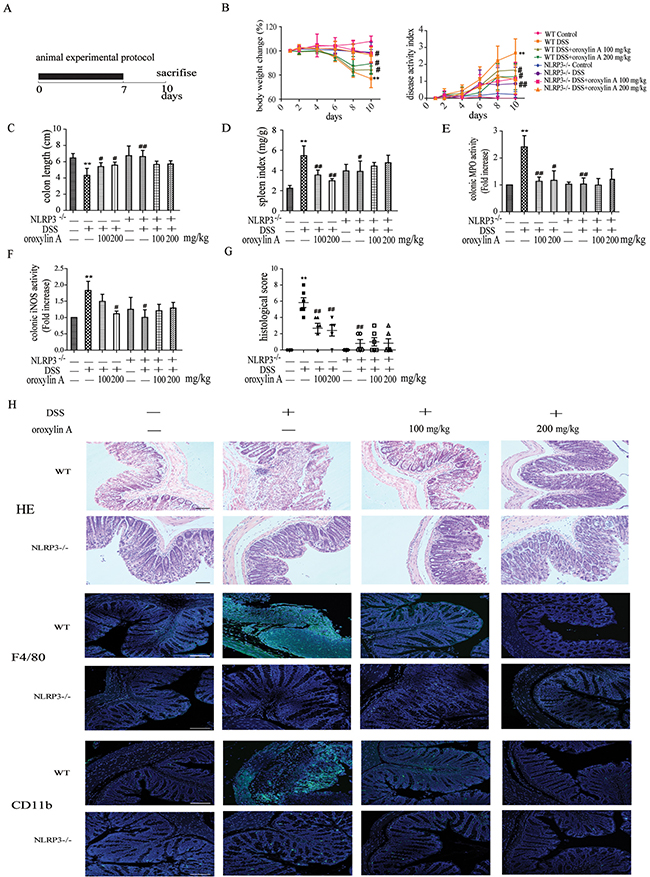 Oroxylin A ameliorated the symptoms of DSS-induced acute colitis via NLRP3 inflammasome.