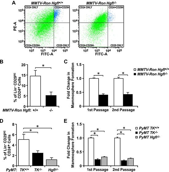 HGFL and RON expression correlate with the proportion and function of BCSCs in spontaneous breast cancer models.