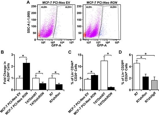 HGFL-RON signaling enhances BCSC numbers.