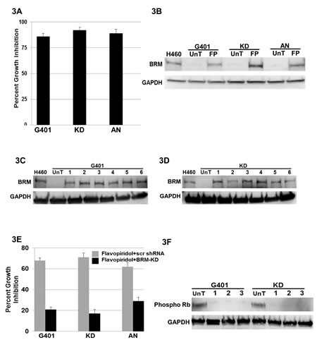 A demonstrates cellular growth inhibition (80-90%) following the transfection of BRM in the Rhabdoid cell lines G401, KD and KPMRT-AN over a period of 5 days.