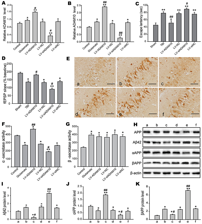 ADAM10 modulated the production of the Aβ peptides involved in cognitive impairments.