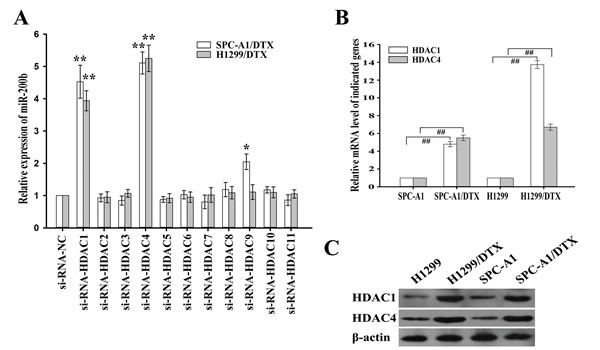 Effects of histone deacetylases (HDACs) on miR-200b expression.
