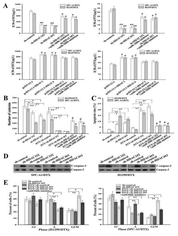 Inhibition of HDAC1/4 reverses chemoresistance of docetaxel-resistant LAD cells partially in a miR-200b-dependent manner.