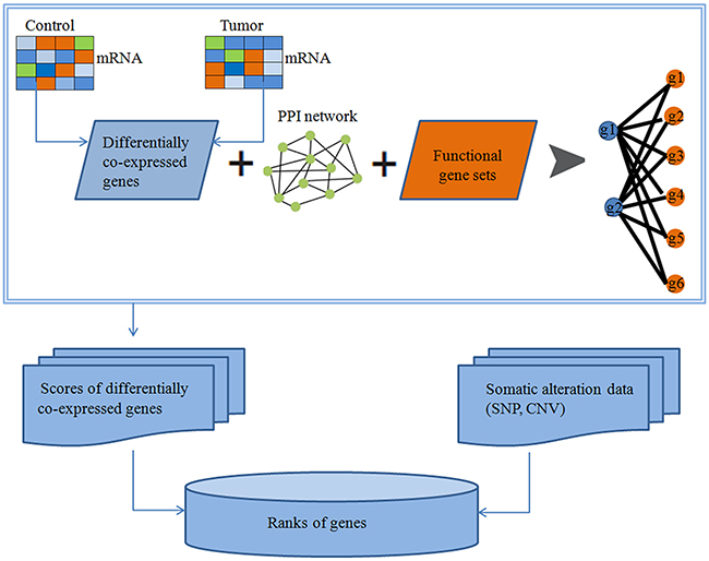 Identification of cancer related genes based on protein-protein interactions (PPIs).