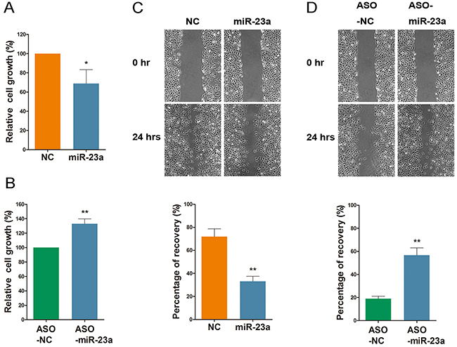 MiR-23a regulates cell viability and migration.