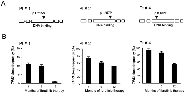 In vivo evolution of frequency of TP53mut clones in response to ibrutinib.