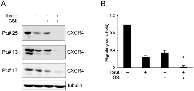 Effect of ibrutinib±GSI on CXCR4/SDF-1α-mediated migration of primary B-CLL cell cultures.