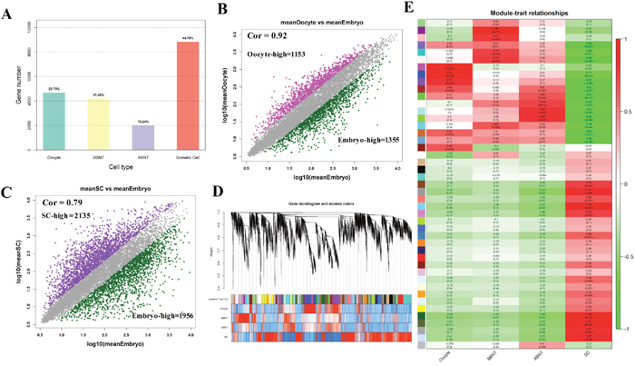 The global landscape of differentially expressed genes and gene coexpression analysis of cell-specific dynamics transcriptiomes.
