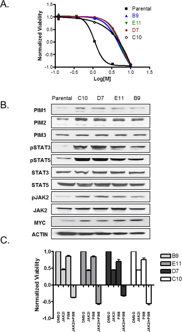 Combination of JAK2 and PIM inhibitors is effective against JAK2 inhibitor-resistant cells.