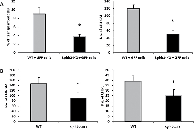 Defects in homing and short-term engraftment of HSPCs in Sphk2-KO mice.