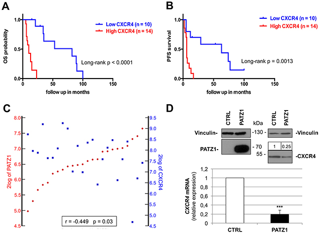 CXCR4 expression correlates positively with worse survival and negatively with PATZ1 in proneural GBM patients.