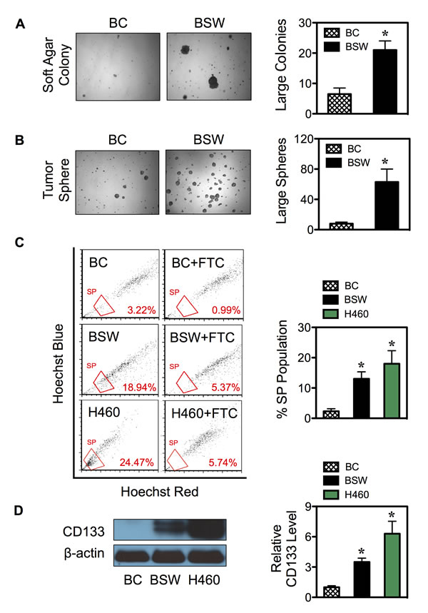 SWCNTs induce CSCs from human lung epithelial cells.