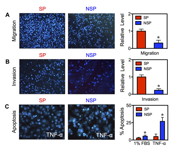 Isolated CSCs display aggressive cancer phenotypes.