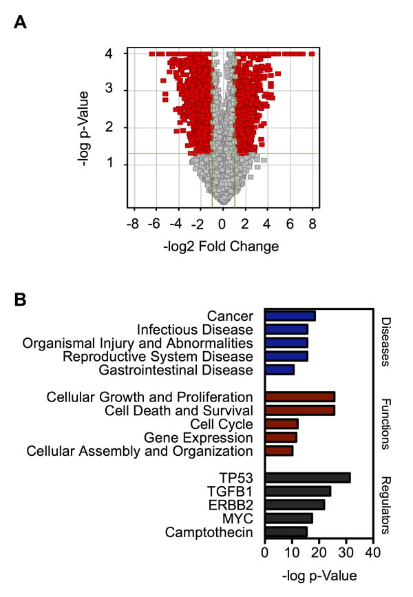 Genome-wide transcription profiles of chronic SWCNT-exposed BSW cells compared to the control BC cells.
