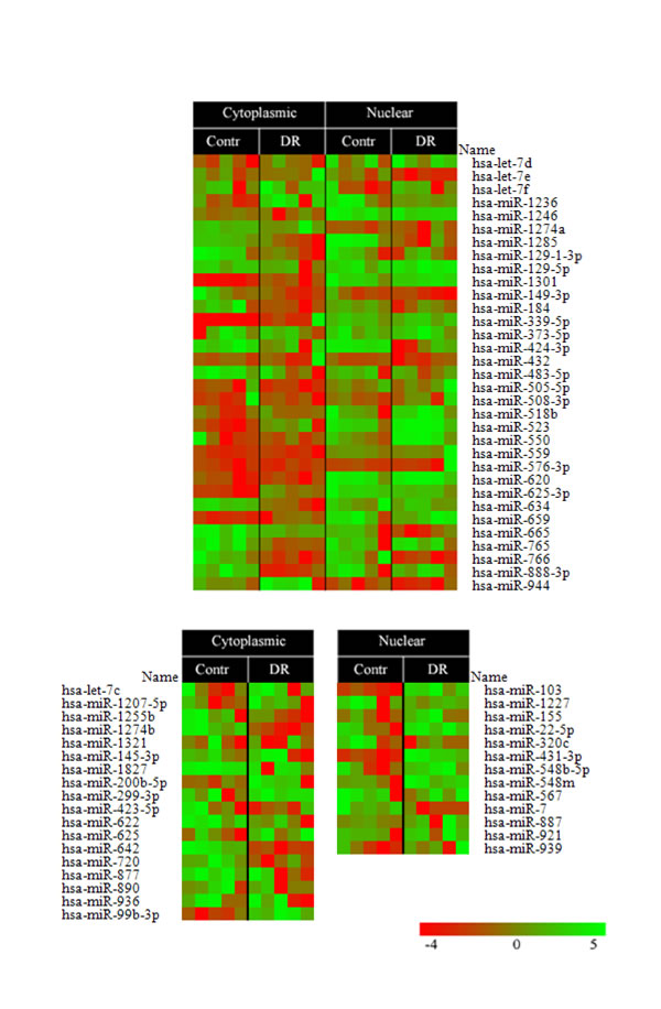A heatmap of miRNA expression levels isolated from cytoplasmic and nuclear proteasomes non-treated (Contr) or treated with doxorubicin (DR).