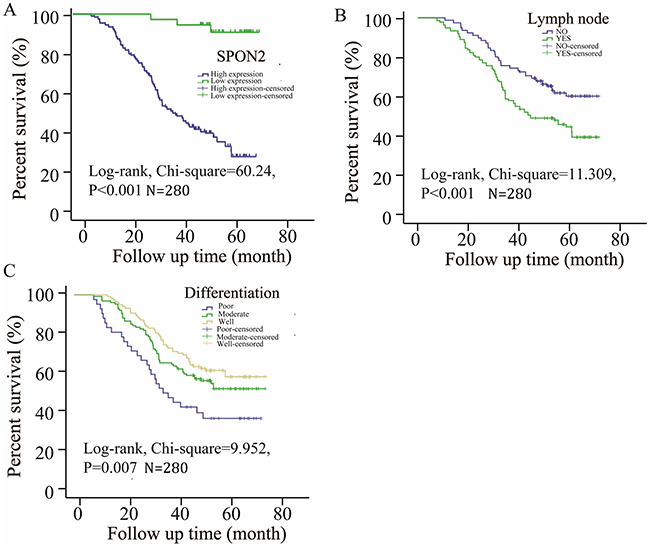 Survival curves of pulmonary ADCs patients by the Kaplan–Meier method and the log-rank test.