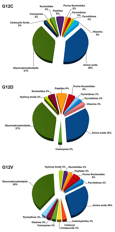 Significantly deregulated metabolites in each of the KRAS mutant clones G12C, G12D, G12V compared to WT, categorized into biochemical groupings based on the Kyoto Encyclopedia of Genes and Genome (KEGG).