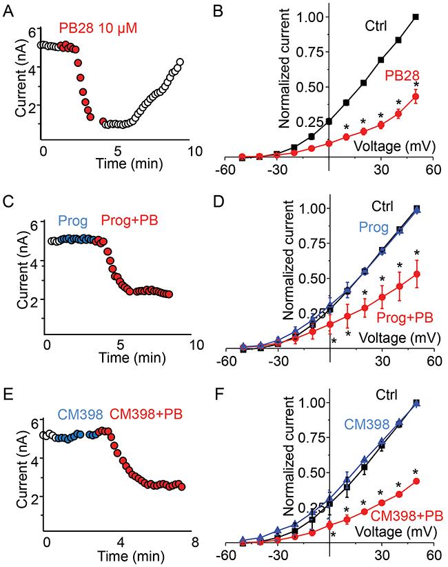 σ2-R agonist PB28 but not antagonists inhibits Kv2.1 current in σ1-R knockout HEK 293 cells expressing Kv2.1 channel.