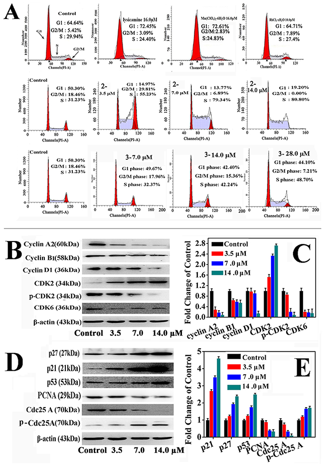 The effects of 2 and 3 treatment in HepG2 cells on cell cycle.