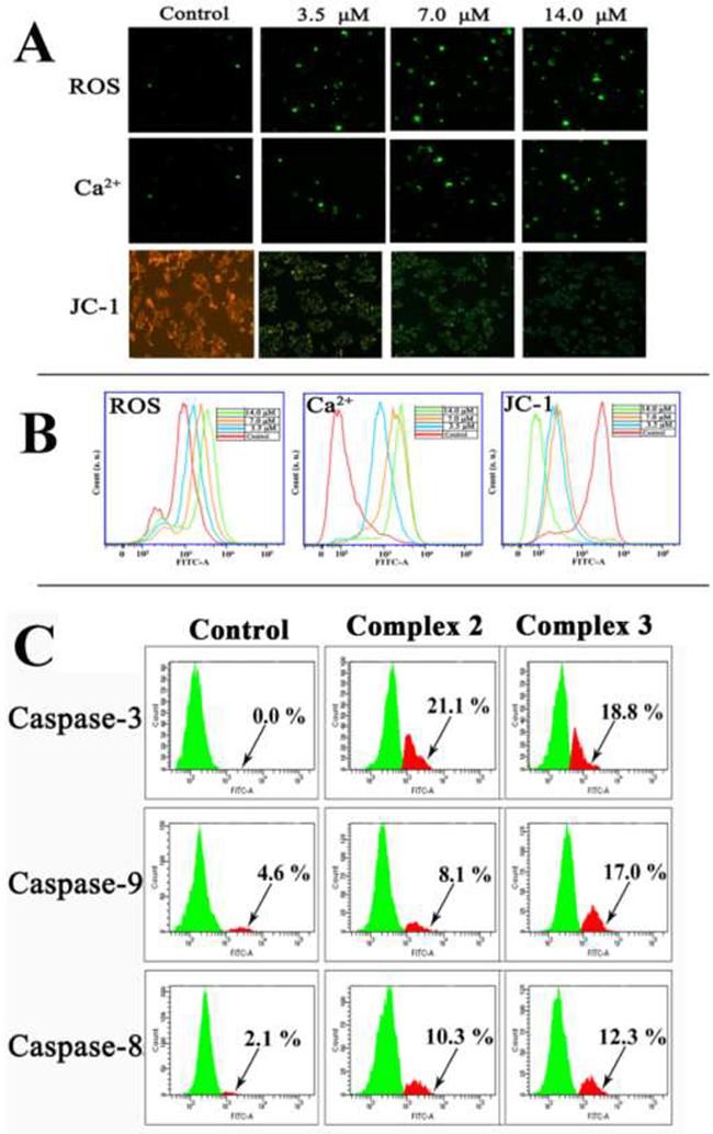 The effect of 2 or 3 on the levels of ROS, intracellular Ca2+, loss of ΔΨm and the activated caspase-3/8/9 expression after HepG2 cells were treated with 2 and 3 for 24 h, respectively.