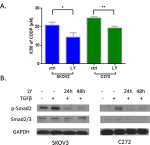 A) Inhibition of TGF-β pathway by inhibitor LY-364947 resensitized cisplatin on SKOV3 and C272 cells.