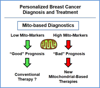 Mitochondrial-based companion diagnostics for personalized cancer therapy.