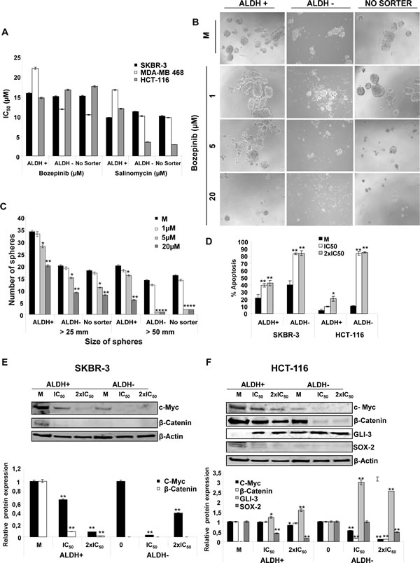 Effects of Bozepinib on ALDH subpopulations.