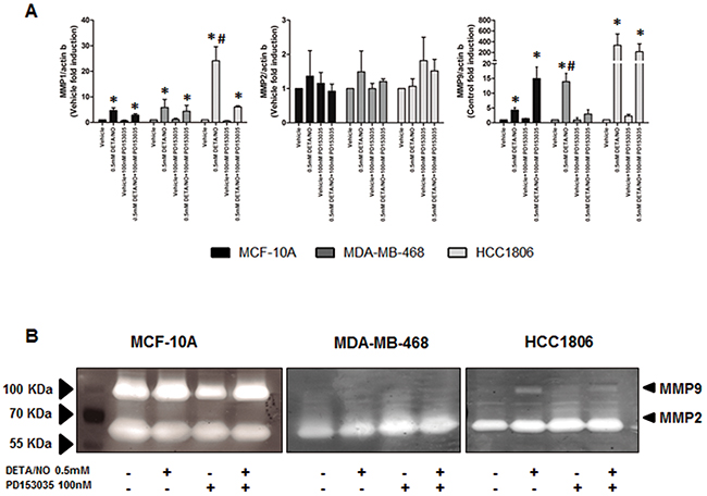NO induces increased MMP expression and activity.