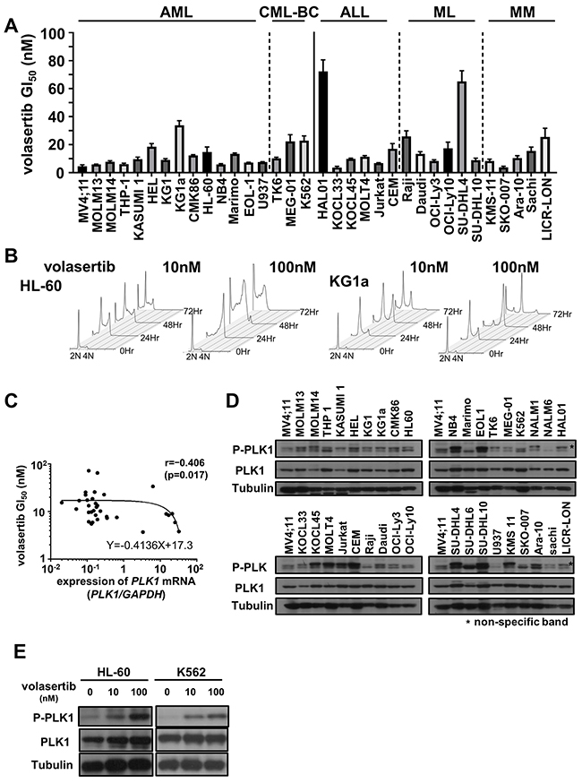 The efficacy of volasertib in a series of human hematological malignant cell lines.