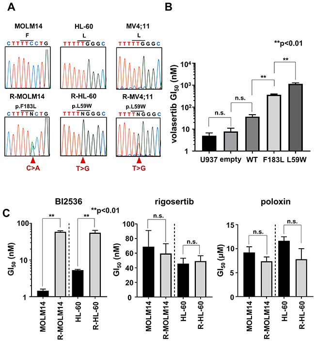 The mutations in PLK1 ATP-binding domain conferred resistance to volasertib.