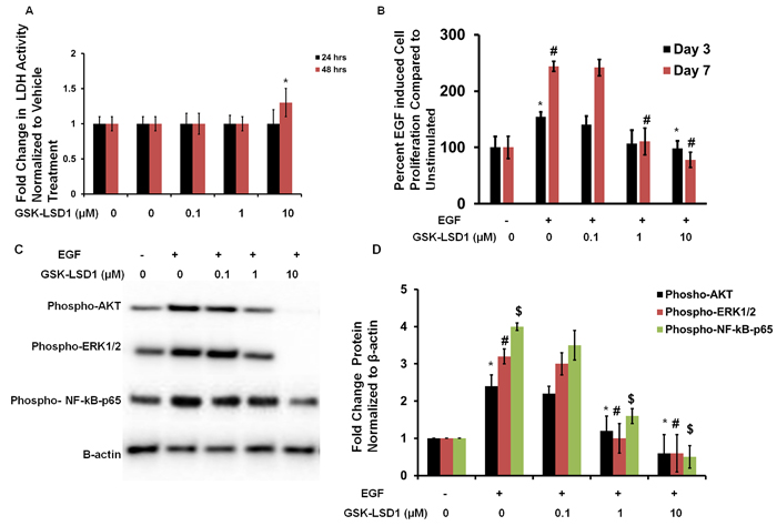 GSK-LSD1 attenuates EGF signaling: