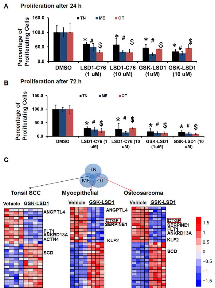Pharmacological inhibition of LSD1 inhibits CTGF and metastatic OSCC mediators.