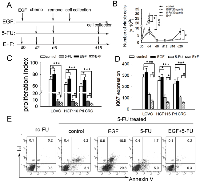 SCCs enriched by cell cycle inducer combined chemotherapy are more approximate to cell-cycle quiescent cells.